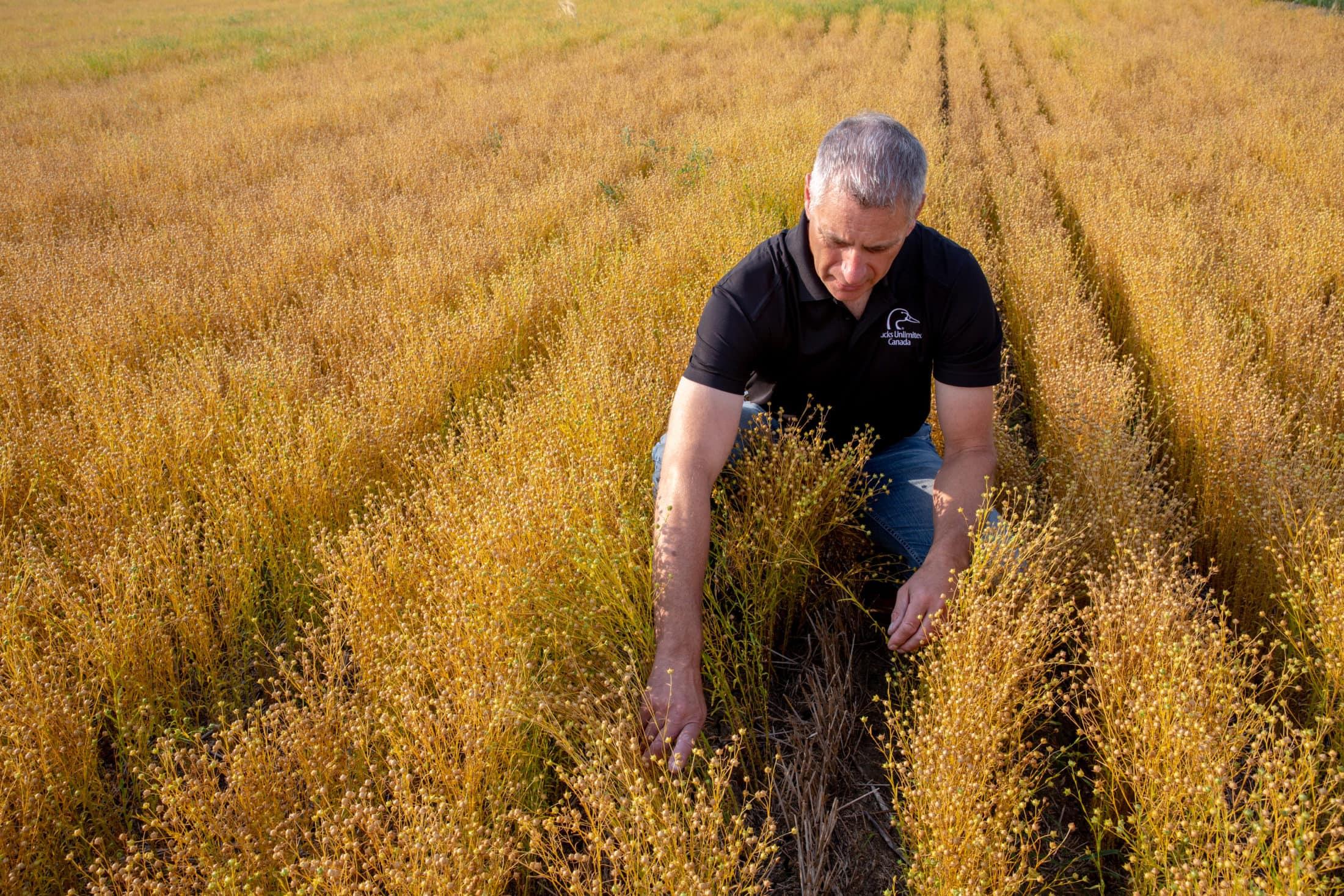 P. Thoroughgood in flax field