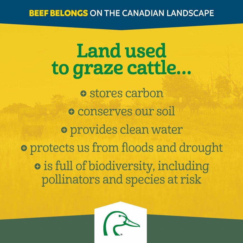 Grazing cattle benefits